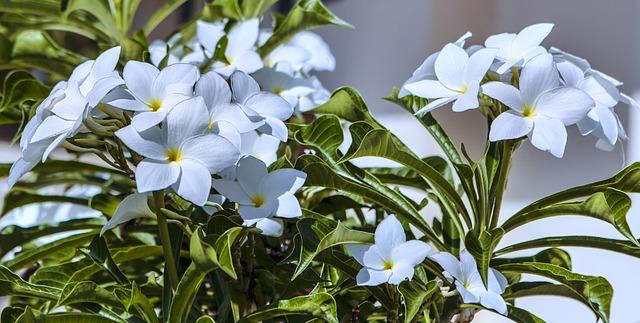 flower-2832975_640